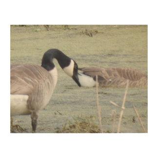 Canada Geese pair in algae covered swampy pond Wood Wall Art