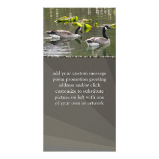 Canada Geese Picture Card