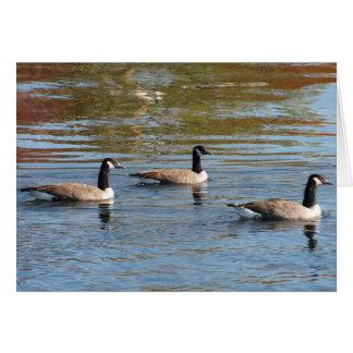 Canada Geese Photography Card