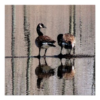 Canada Geese Print