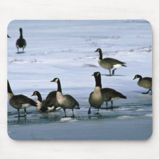 Canada Geese, standing on frozen river Mouse Pads