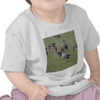 Canada Geese Tee Shirt