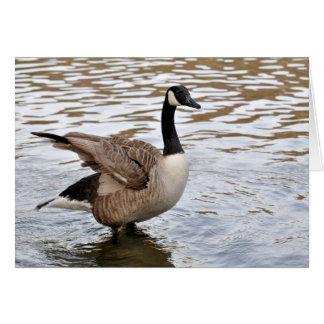 canada goose004 greeting cards