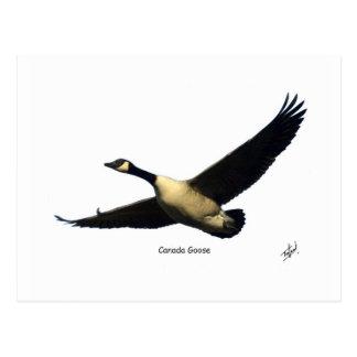 Canada Goose 9R005D-123 Postcard