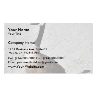 Canada goose at Goose Lake, Anchorage Business Card
