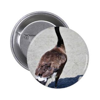 Canada goose at Goose Lake, Anchorage Pin