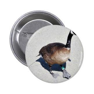 Canada goose at Goose Lake, Anchorage Pinback Buttons