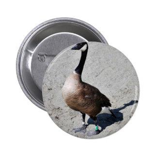 Canada goose at Goose Lake, Anchorage Pinback Button