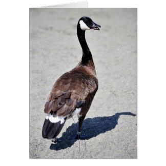 Canada goose at Goose Lake, Anchorage Greeting Cards