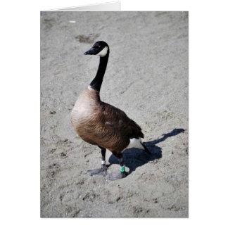 Canada goose at Goose Lake, Anchorage Greeting Card