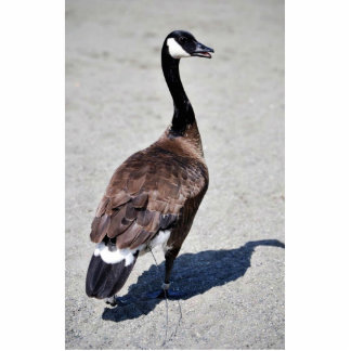 Canada goose at Goose Lake, Anchorage Acrylic Cut Out