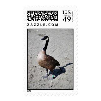 Canada goose at Goose Lake, Anchorage Stamp