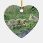 Canada Goose Babies 2 Animal Ornament
