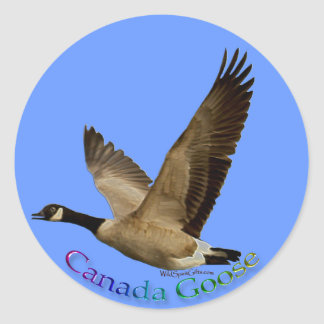 Canada Goose Bird Wildlife Sticker