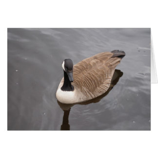 Canada Goose Birthday Card