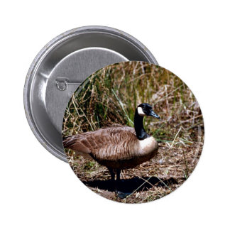 Canada goose buttons