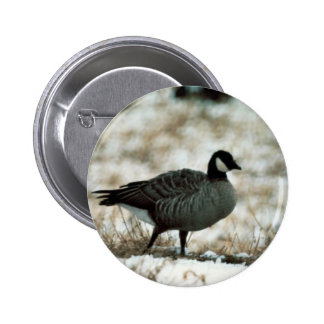 Canada goose pins