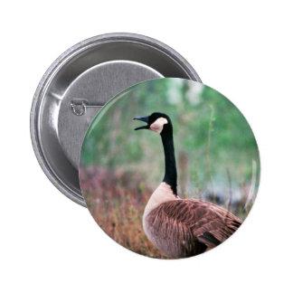 Canada goose pinback button