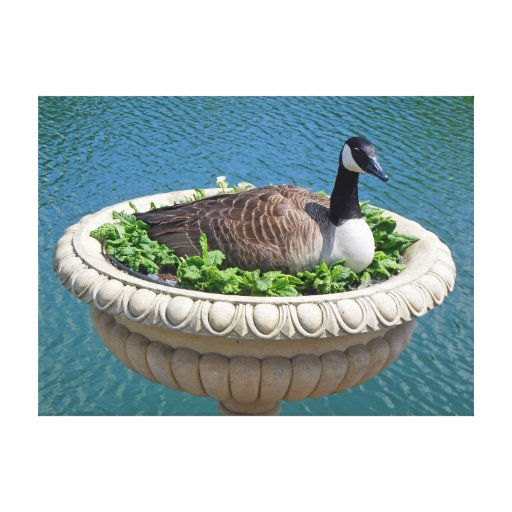Canada Goose Picture To Canvas