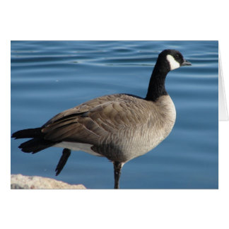 Canada Goose Greeting Cards