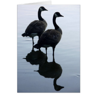 Canada Goose Cards Canada Geese Greeting Cards