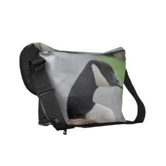 Canada goose courier bag