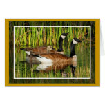 Canada Goose Family Greeting Cards