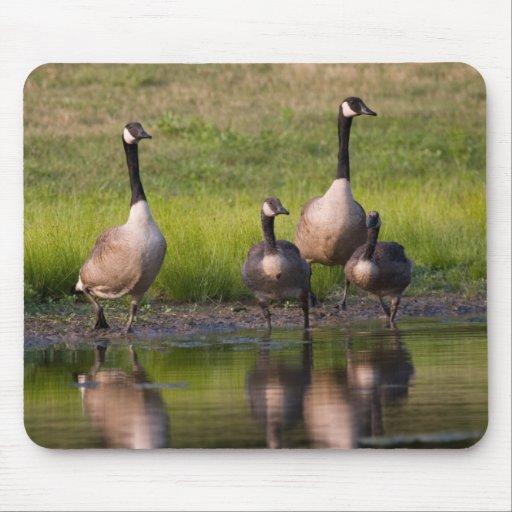 Canada Goose Family Mousepad