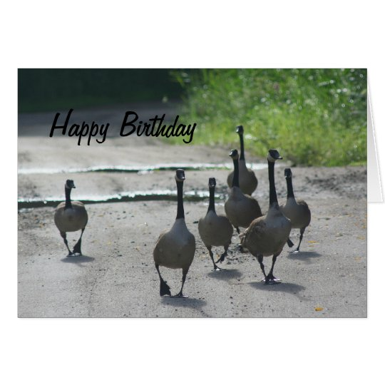 Canada Goose Family Nature Birthday Card – Birthday Cards Canada