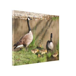 Canada Goose Family Nature Canvas Print