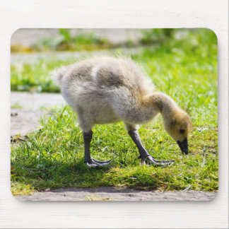 Canada Goose Gosling Mouse Pad
