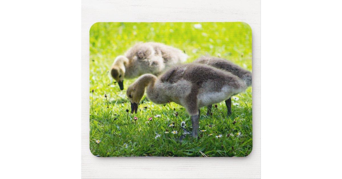 Canada Goose' authentic pad
