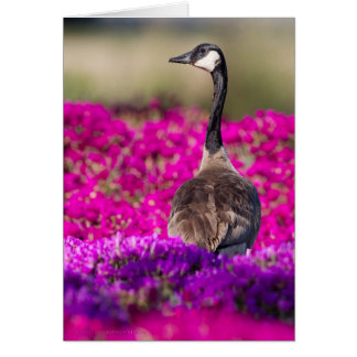 Canada Goose Greeting Card - Custom Text