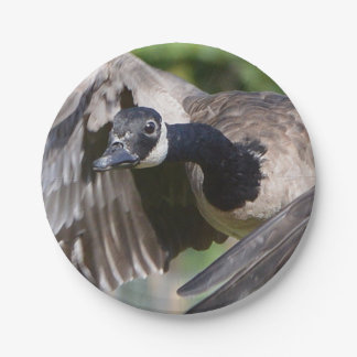Canada Goose In Flight Paper Plate