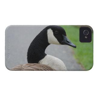 Canada goose iPhone 4 Case-Mate case