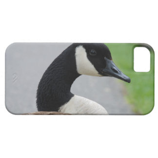 Canada goose iPhone SE/5/5s case