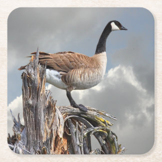 CANADA GOOSE ON A SNAG SQUARE PAPER COASTER