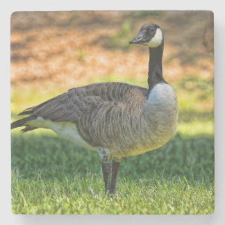 CANADA GOOSE ON GRASS STONE BEVERAGE COASTER