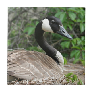 Canada Goose on Her Nest Ceramic Tile