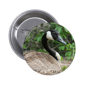 Canada Goose on Her Nest Pinback Button