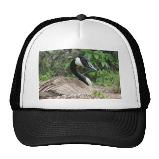 Canada Goose on Her Nest Trucker Hat