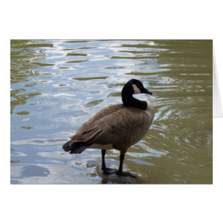 Canada Goose On Rock Greeting Cards