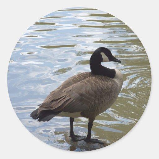 Canada Goose On Rock Classic Round Sticker