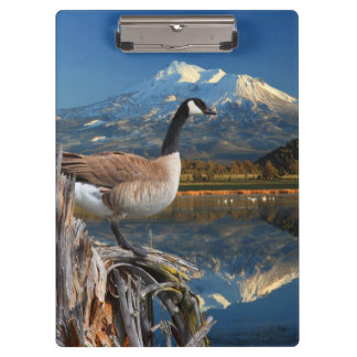 CANADA GOOSE ON THE LAKE CLIPBOARD