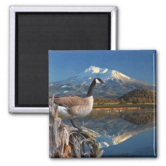 CANADA GOOSE ON THE LAKE MAGNET