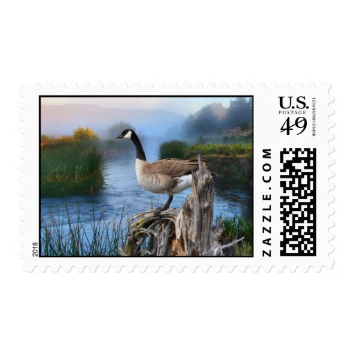CANADA GOOSE ON THE SHASTA STAMPS