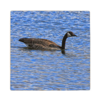 CANADA GOOSE ON WATER WOOD COASTER