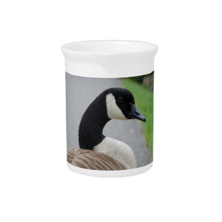 Canada goose pitcher