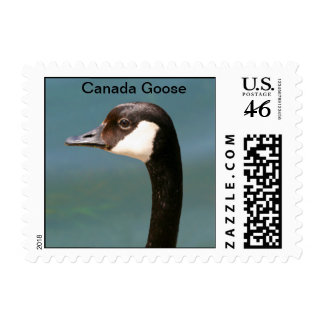 Canada Goose Postage Stamps
