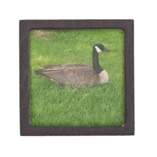 Canada Goose Premium Gift Box
